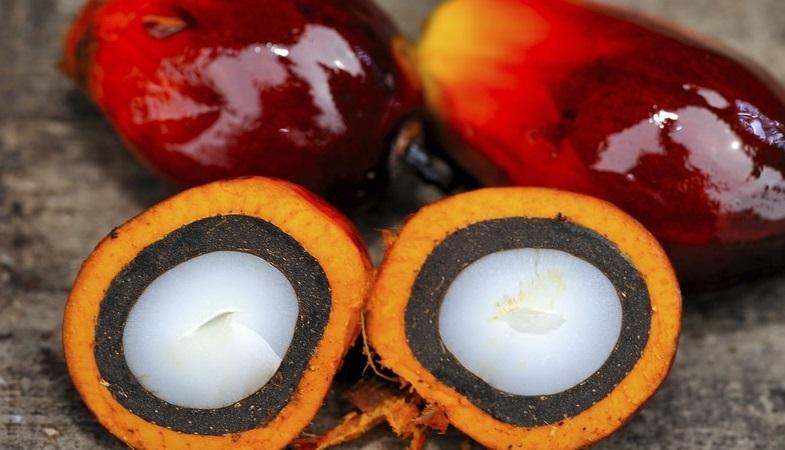 Пальмовое масло из плодов